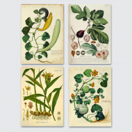 4_plakaty_botanica_vintage