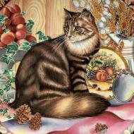 AYNSLEY AUTUMN CAT