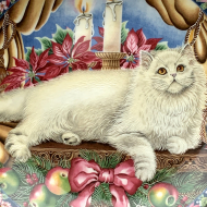 AYNSLEY WINTER CAT