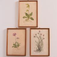 komplet 3 grafik z lat 50 kwiaty (1)