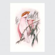 plakat-ptaki-tropikalne-kakadu