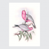 plakat-ptaki-tropikalne-papuga