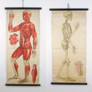Tablice anatomiczne