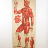 Vintage Anatomical Charts_01