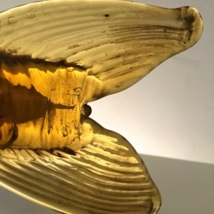 złota ryba ii